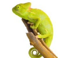 Borderline Personality Disorder and 'The Chameleon Effect'